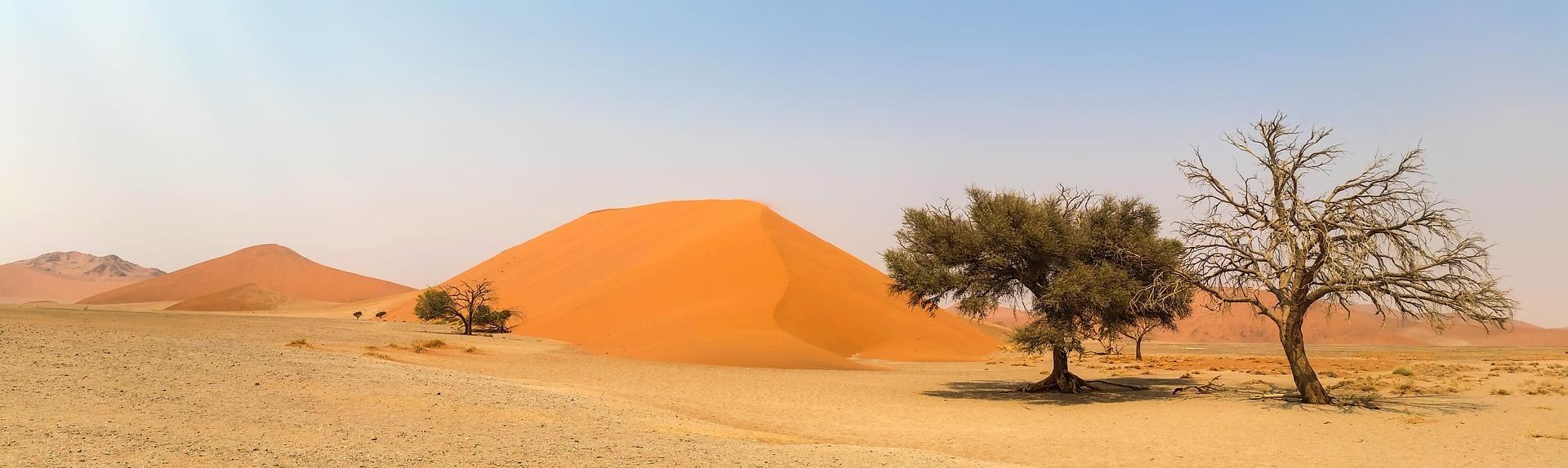 Namibia Wüstendüne mit Bäumen